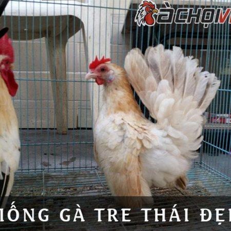 Top 5 gà tre đẹp nhất Việt Nam ai cũng nên có